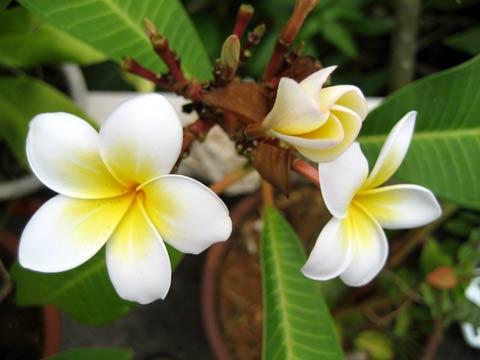 沖縄県国頭郡恩納村前兼久漁港に咲く花