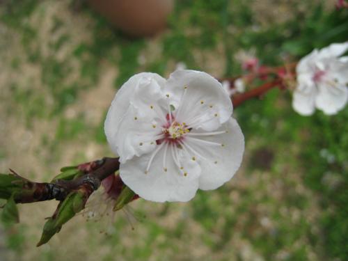家の庭の花