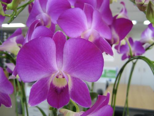 松葉眼科のスタッフからも、お祝いのお花を頂きました