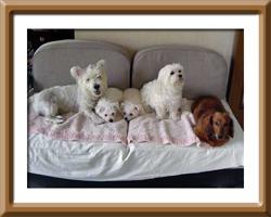 【2004年8月末に撮った愛犬6匹の写真】
