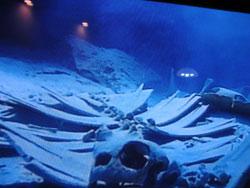 海亀の遺骨