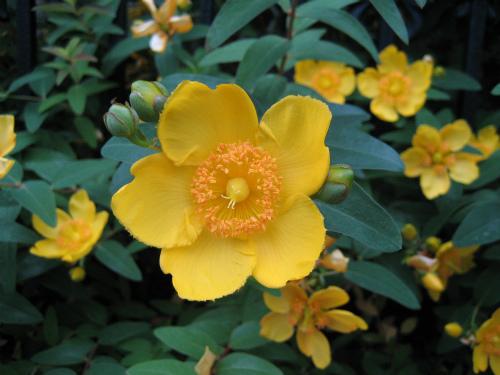 壁一面の花