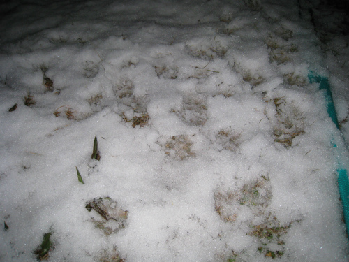 神戸で積雪