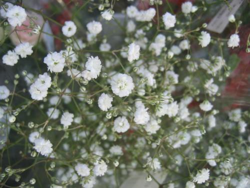 旬彩蔵の菊の花