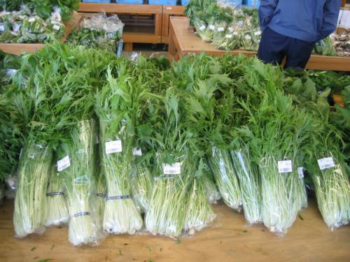 旬彩蔵の水菜