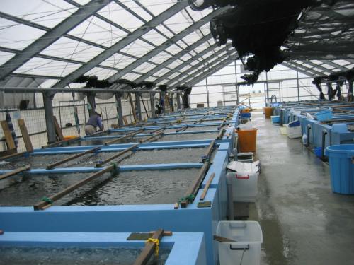 海ブドウの栽培所