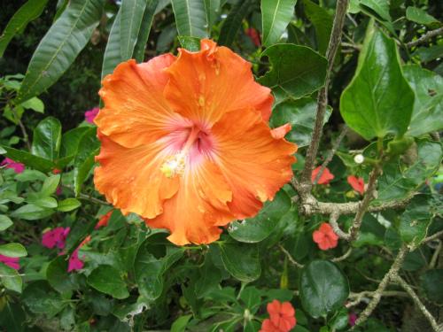 沖縄の民話