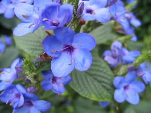 沖縄・山原(やんばる)の花