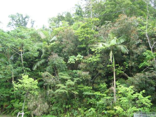 原生林の様子