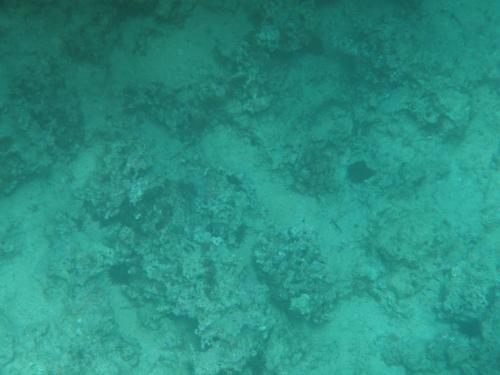 真栄田岬にダイビング