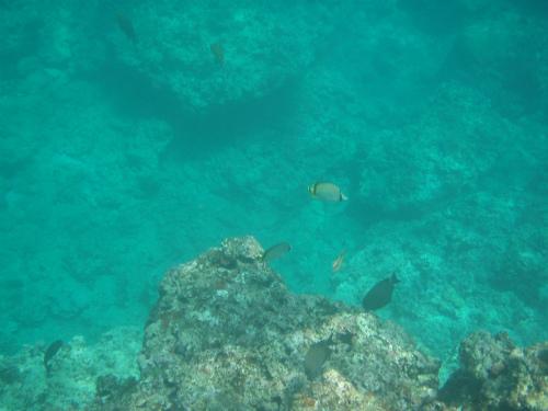真栄田岬へダイビング:青の洞窟