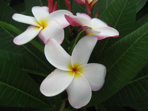 沖縄恩納村に咲く花