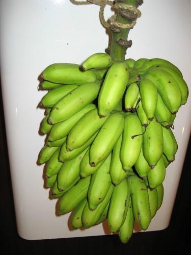 沖縄のバナナ