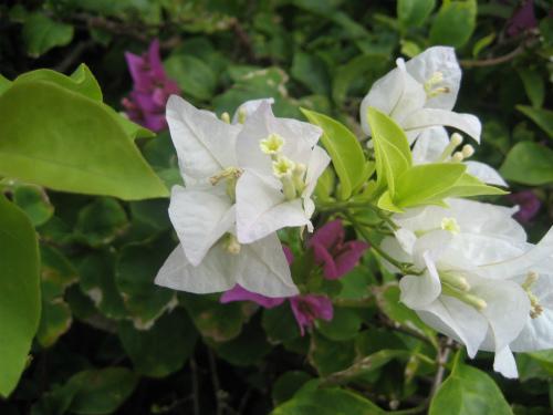 ザ・ブセナテラスホテルの花