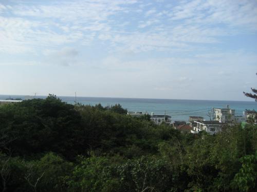 沖縄本島では珍しい水田
