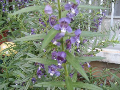 沖縄恩納村前兼久の道を歩いて見つけた草花