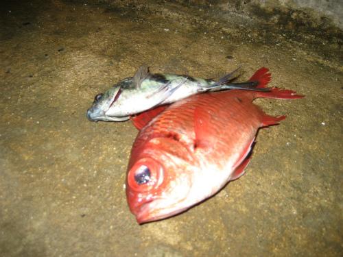 漁で取れた魚