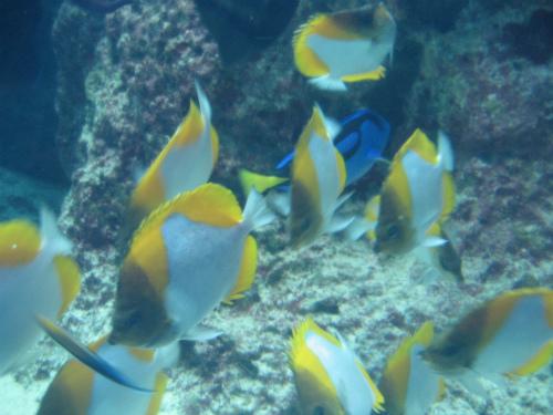 沖縄海洋博