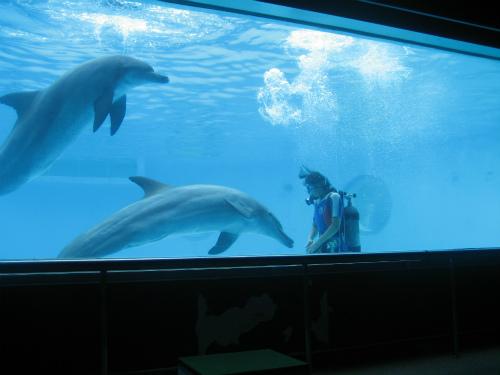 沖縄海洋博 イルカ