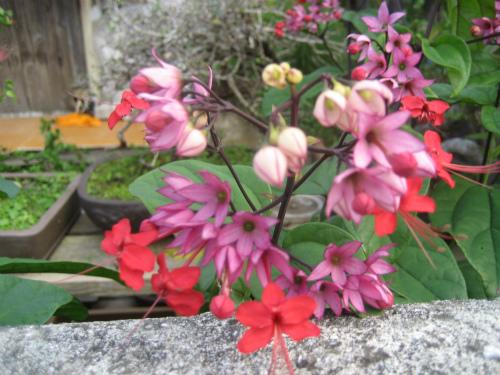 12月でも、美しい花が咲いています