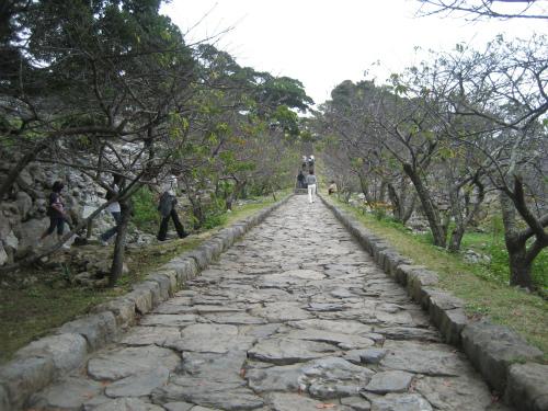 道の両側の緋寒桜は、まだつぼみの状態です