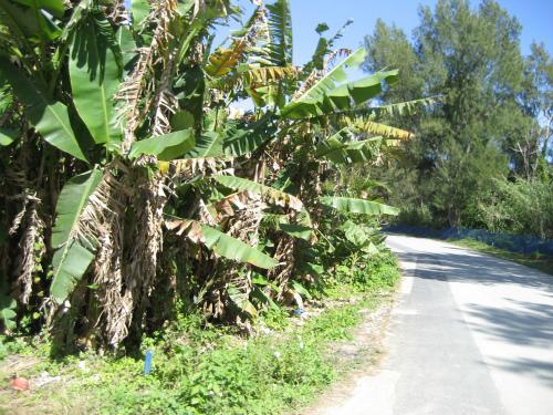 マングローブの林は、昔の沖縄の面影を残しています