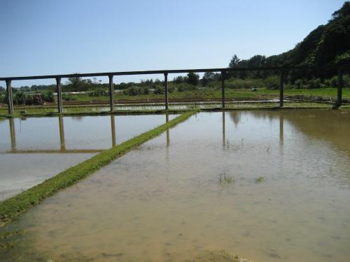 遠くから畑に水を引くための、水路であり、筧です