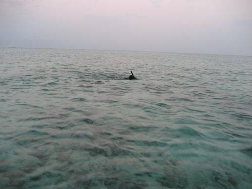 海に潜る、片山正喜さん
