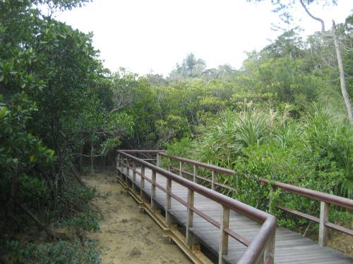 マングローブの林の中は、歩道が整備されています