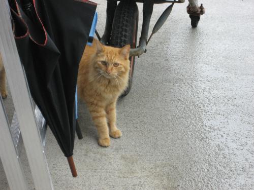松田美代さんの魚屋さんの前には、ネコが何匹も集まっています