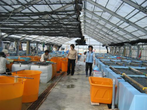 上間光元さんがいる海ブドウの栽培センターに、ご挨拶に行きました