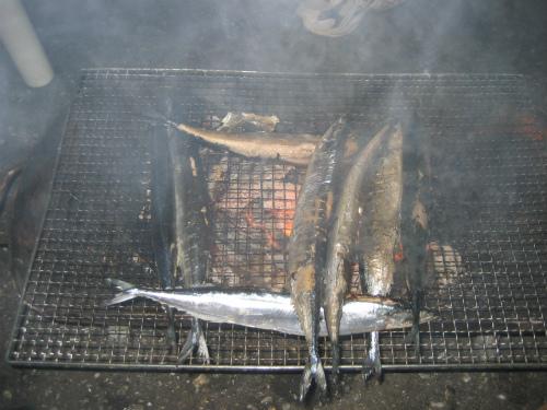 炭火で、中までしっかりとサンマを焼きます