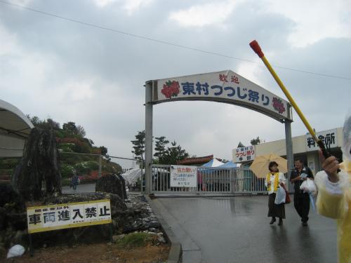今年の東村つつじ祭りのつつじは、不作のようです