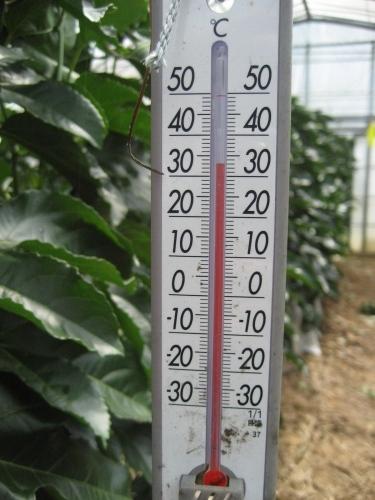 パッションフルーツの温室は、温度が33度あります