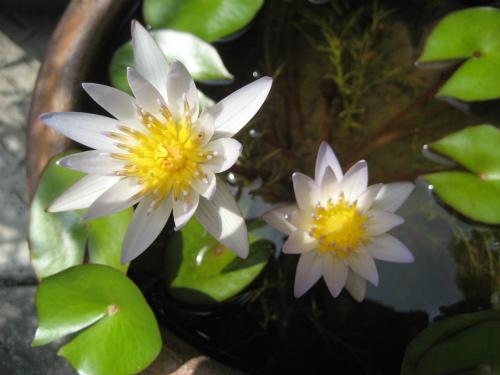 植物や鉢植えの植木も並んでいて、南国の花が咲いています