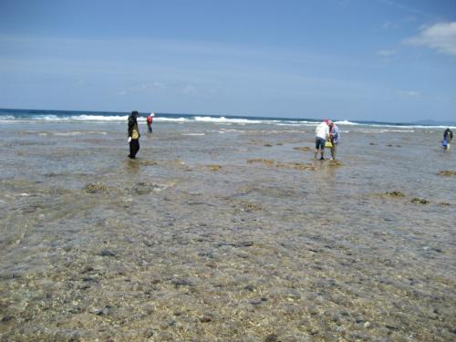 潮干狩りが出来る珊瑚礁が水面から現れました