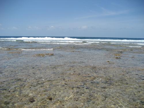 すっかり潮は引いて、珊瑚の岩が空気に触れるところまで来ています