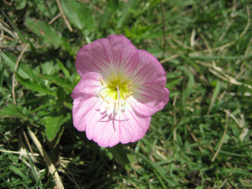 海辺に咲いている小さな花が、励ましてくれました