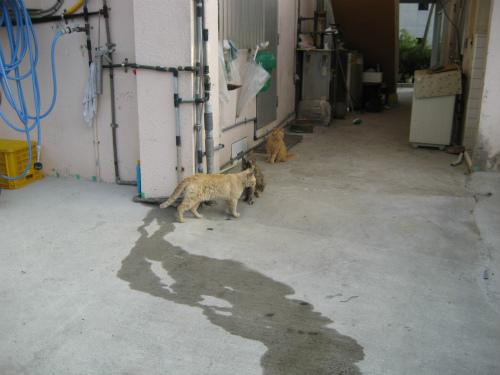 松田鮮魚店の前には、相変わらずネコが何匹もいます