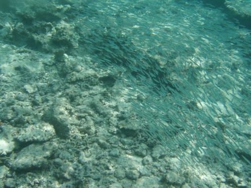 珊瑚礁の海を覗いてみます