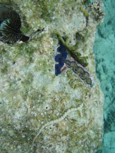 シャコ貝と、タツノオトシゴのような魚がいました