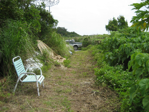 片山正喜さんのお家のすぐ側に、家庭菜園