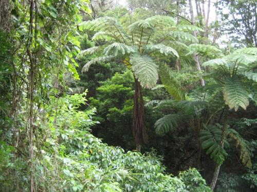 温室の中の熱帯植物園のような南国の樹木