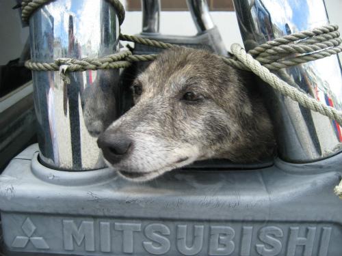 片山正喜さんの愛犬リーも一緒に四輪駆動に乗って、一緒にビーチに行きます