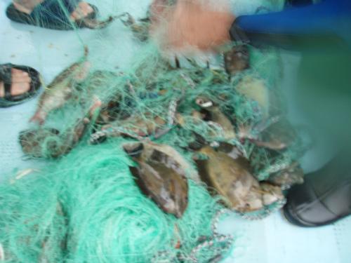 追い込み漁