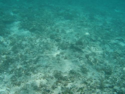 台風の後なので、海底の砂が舞い上がり、透明度が良くありません
