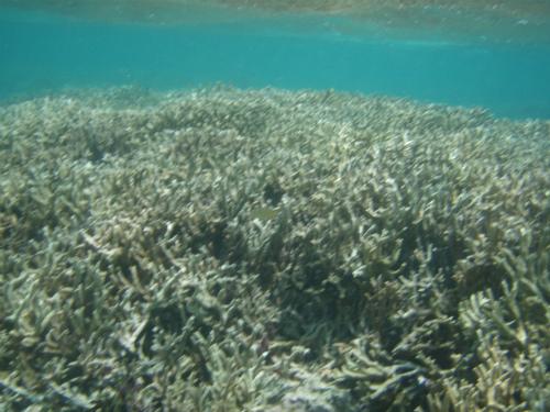 折れた珊瑚枝が散らばっていました