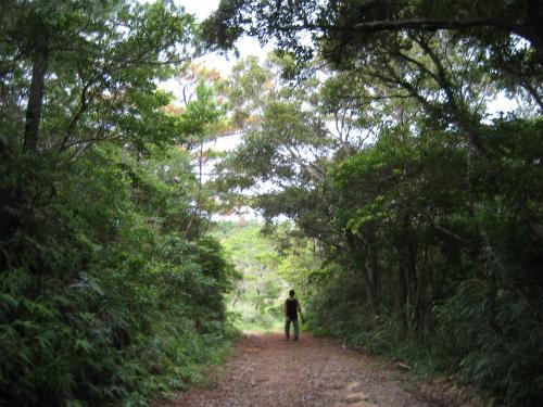 ジュゴンの見える丘へ