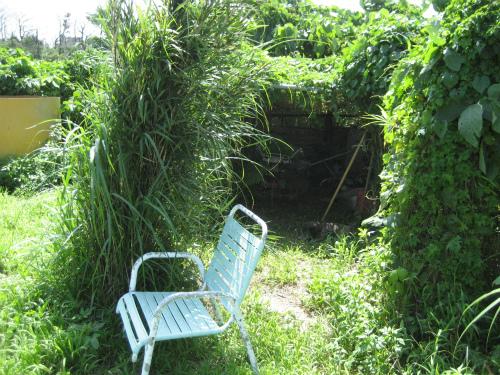 片山正喜さんの畑