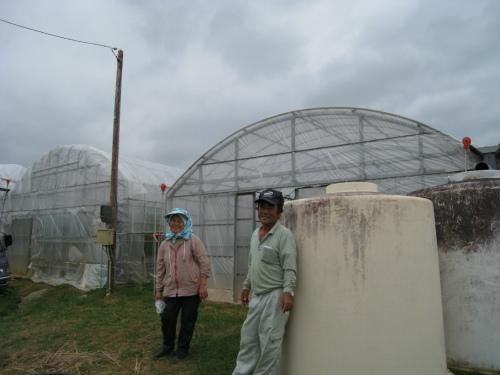 パッションフルーツを作っているハウス農場